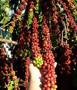 Assentamento Flor do Amazonas recebe curso sobre Boas Práticas de Manejo do Café
