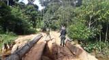 Força Tarefa Amazônia denuncia nove pessoas por invasão e loteamento da terra indígena Karipuna