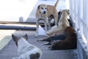 Campanha antirrábica tem meta de vacinar mais de 80% dos animais domésticos em Rondônia