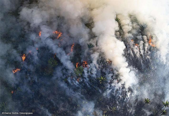 Bolsonaro autoriza uso das Forças Armadas no combate a queimadas na Amazônia