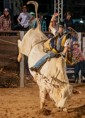Lei assegura bem-estar animal em todas as atividades esportivas e culturais com bovinos e equinos
