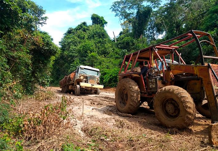 Vídeo: Posseiros continuam derrubada ilegal em floresta de Cujubim