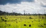 Governo Federal autoriza uso das Forças Armadas no combate ao desmatamento