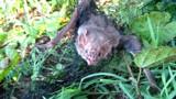Contato com morcegos e animais doentes ou mortos pode transmitir a raiva, alerta Idaron
