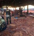 Operação da PF combate exploração ilegal de madeira em terras indígenas