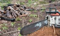 Aplicativo permite denúncias de crimes ambientais na Amazônia