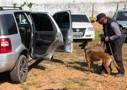 Segurança Pública de Rondônia investe em cães farejadores para combater o tráfico de drogas
