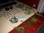 Polícia prende homem com porções de droga e pé de maconha