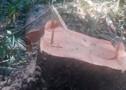 Adolescente também morre esmagado por árvore em Rondônia