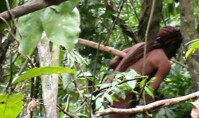 Funai e Sesai devem fazer barreira sanitária e de segurança para proteger indígenas isolados, recomenda MPF