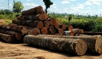 STF mantém prisão de acusado de chefiar organização criminosa  em Rondônia