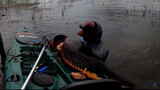 Vídeo: Pescador fisga pirarucu com 2 metros e 100 quilos em Jaci-Paraná