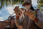 Levantamento ajuda identificar focos do mosquito Aedes aegypti