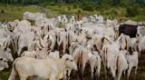 Prazo para declaração de rebanhos de Rondônia a Idaron é prorrogado para 18 de junho