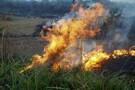 Sedam intensifica ações de prevenção às queimadas e incêndios florestais em Rondônia