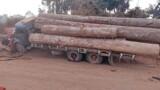 Família morre em acidente entre carro e caminhão carregado de toras