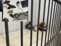 Criminosos fazem família refém, roubam caminhonete, mas acabam presos