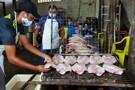 Festival Nacional do Tambaqui da Amazônia mobiliza produtores de peixe da região central de Rondônia
