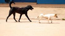 Campanha para imunizar cães e gatos em Porto Velho começa nesta segunda-feira