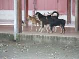 Publicada lei que proíbe sacrifício de animais por centros de zoonoses e canis